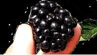 Бромба Деликадо (Bromba Delikado)